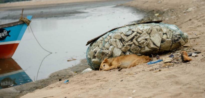 Mumbai : Juhu Beach : October 2012 : Dog