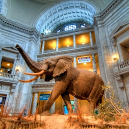 Smithsonian Museum of Natural History