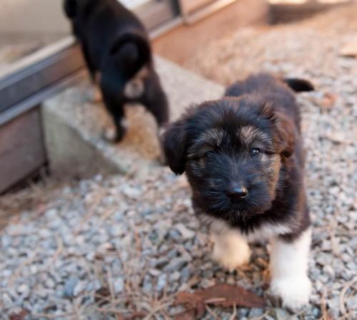 Puppies & Bunnies 26