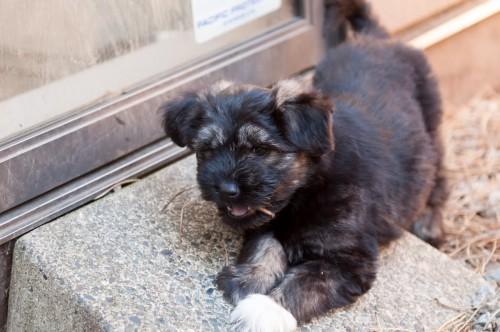 Puppies & Bunnies 25