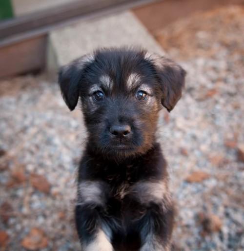 Puppies & Bunnies 24