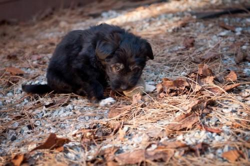 Puppies & Bunnies 23