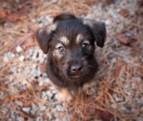 Puppies & Bunnies 20