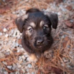 Puppies & Bunnies 1
