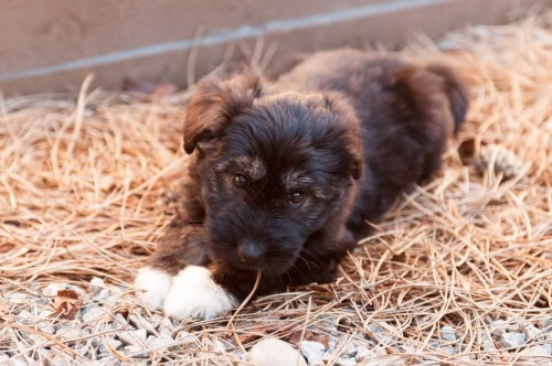Puppies & Bunnies 21