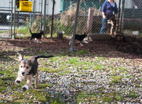 Shelter Dogs March 17 2012 22