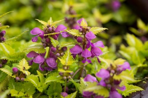 D800 Test Image - flowers