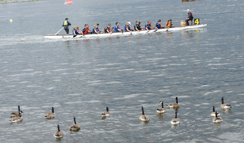 Dragon Boat Festival : 2012-06-17 : Geese like the show