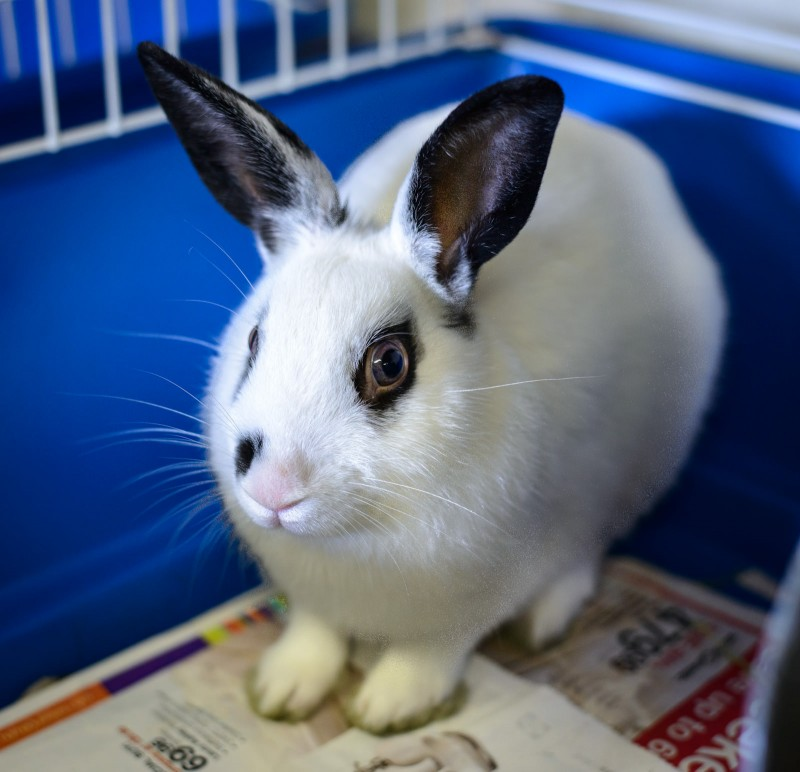Shelter Dogs : 2012-06-23 : Bunny 2