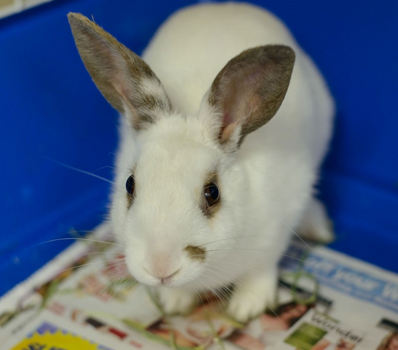 Shelter Dogs : 2012-06-23 : Bunny 3