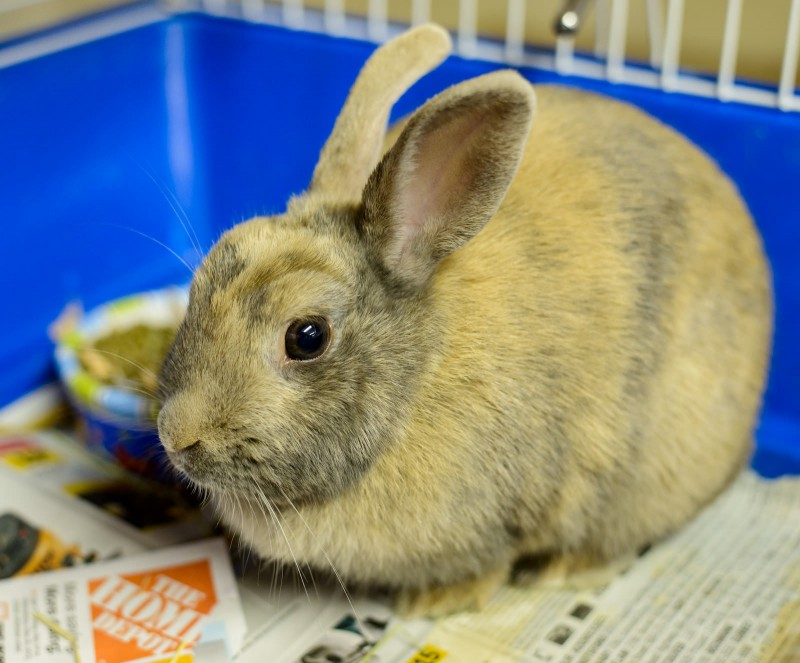 Shelter Dogs : 2012-06-23 : Bunny 1