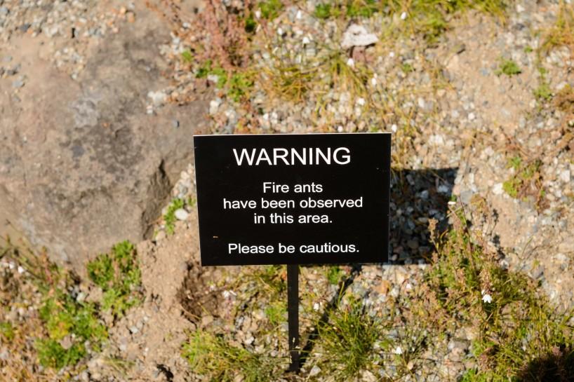 UBC Botanical Garden Fire Ants