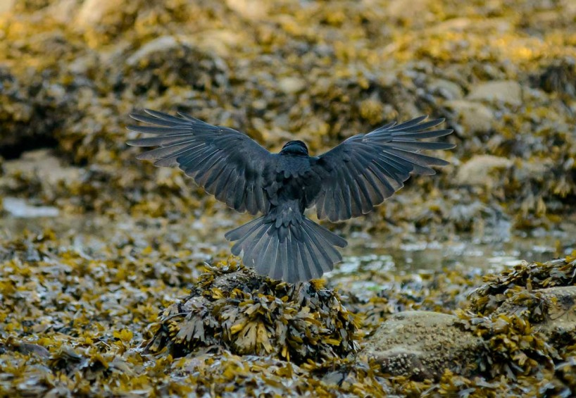 Acadia-Beach : 2012-07-10 : Crow Landing