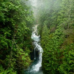 Lynn Valley Hike : Suspension Bridge and Twin Falls 2012-12-29 : View from suspension bridge