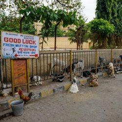 2012 Oct : Mumbai India Visit : Mutton Shop