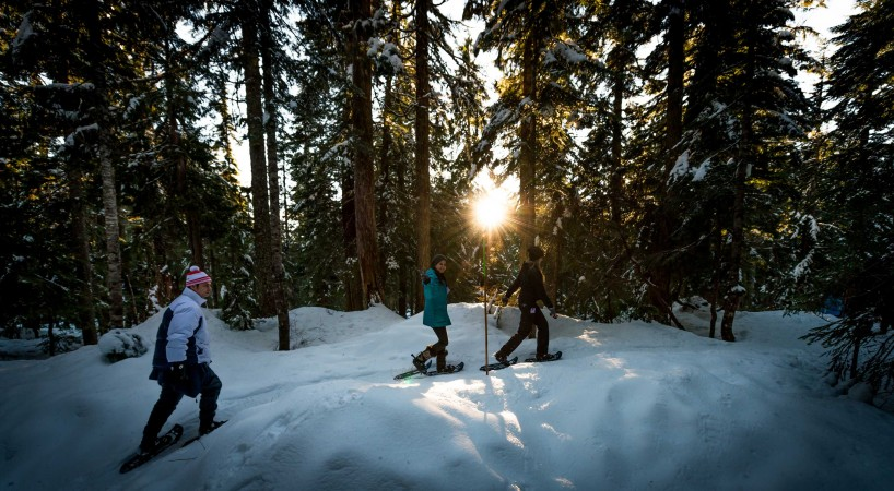 Cypress Mountain Snowshoeing 2014-03-20: Dusk in the Woods