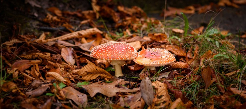 2015-10-21-2015-10-21-October-Flowers-and-Mushrooms-5819-MKH