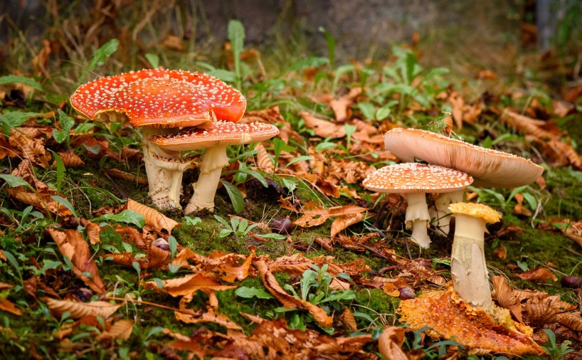 2015-10-21-2015-10-21-October-Flowers-and-Mushrooms-5820-MKH