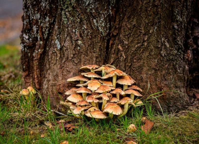 2015-10-21-2015-10-21-October-Flowers-and-Mushrooms-5843-MKH
