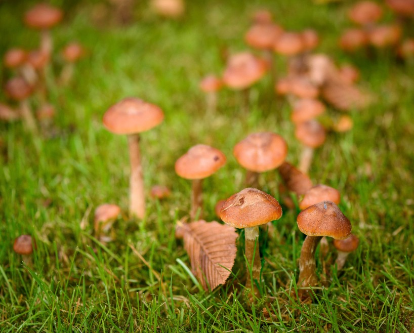 2015-10-21-2015-10-21-October-Flowers-and-Mushrooms-5852-MKH