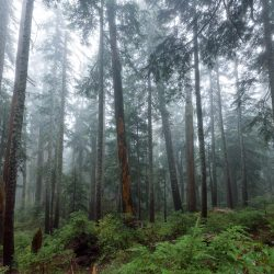 Saint Marks Summit Hike - Sept 2016 - Foggy Trees
