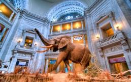 Smithsonian Museum of Natural History : Washington DC