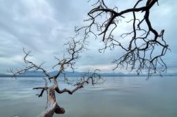 Arbutus Trees, Valdes Island, Canada