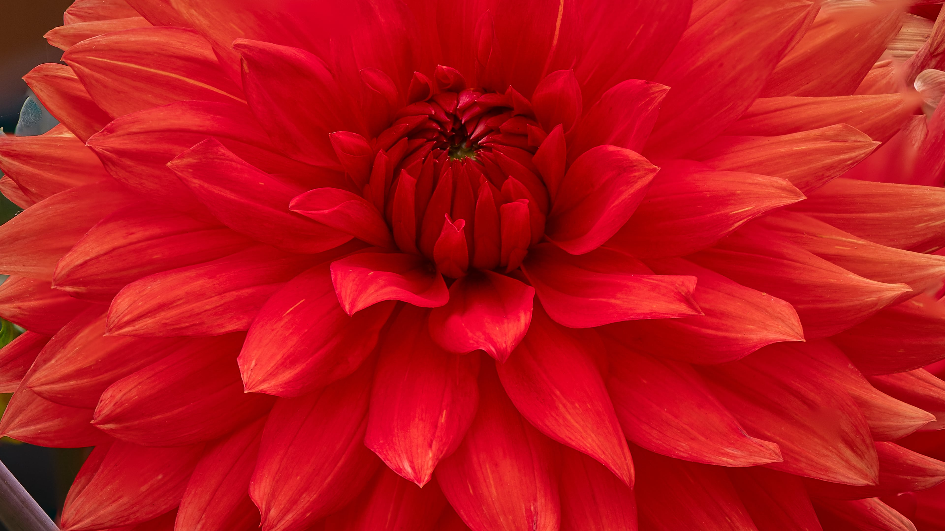 Nikon Z7 Focus Shift - Stacked with Adobe Photoshop - Flower Detail 3