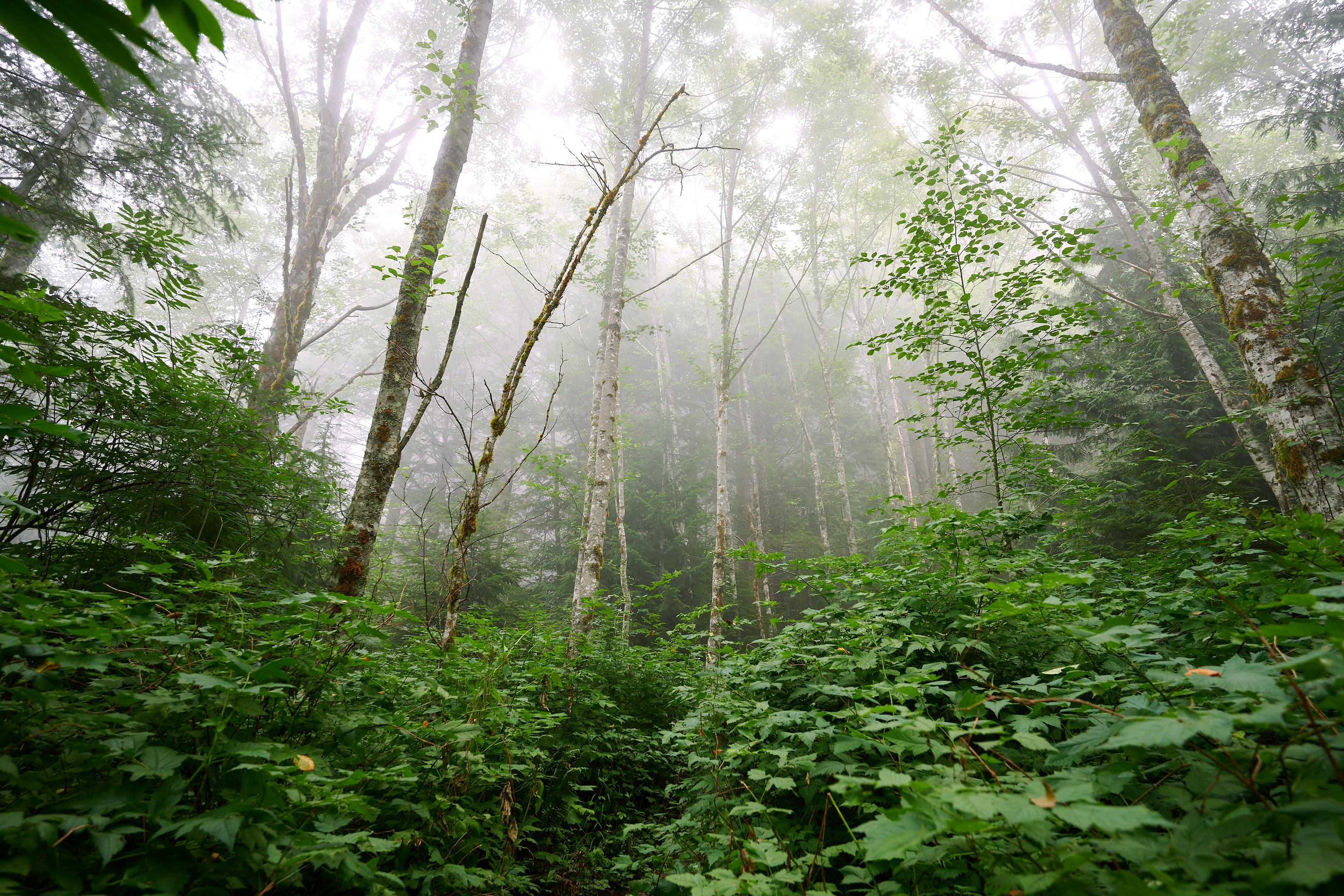 Hiking Brunswick Mountain 40